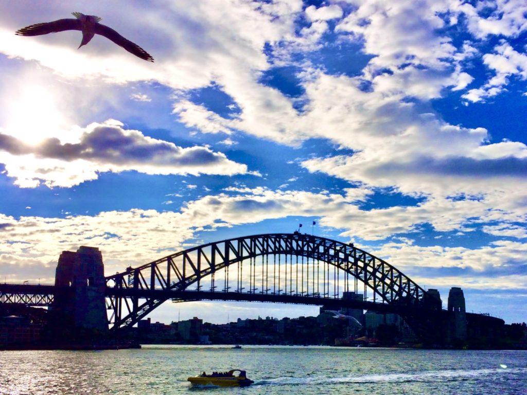 シドニーのハーバーブリッジと上空を飛ぶ鳥の風景