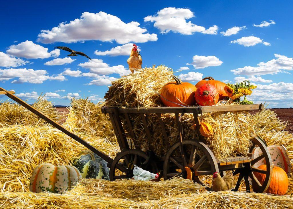 かぼちゃが荷台に乗っている風景