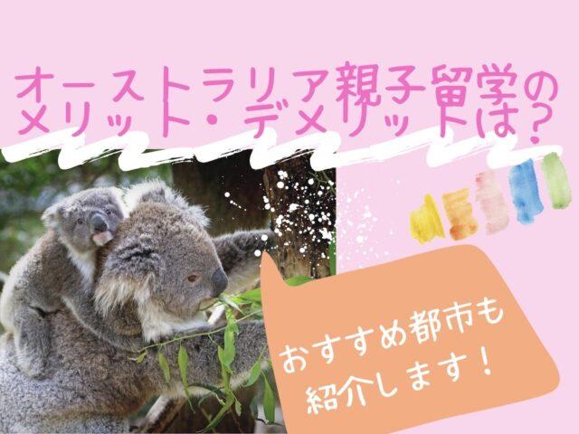 親子のコアラの写真